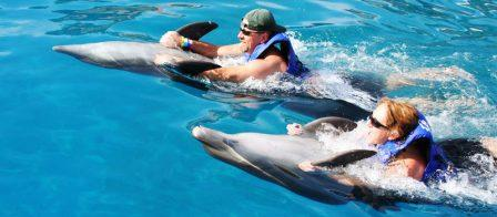 Vallarta_Adventure_Dolphin_Programs